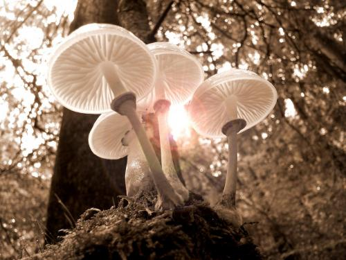 forest-mushrooms-nature-autumn-361186