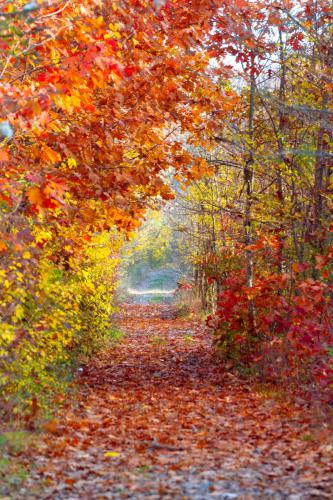 forest-fall-red-trail-20181024a2133 FPX