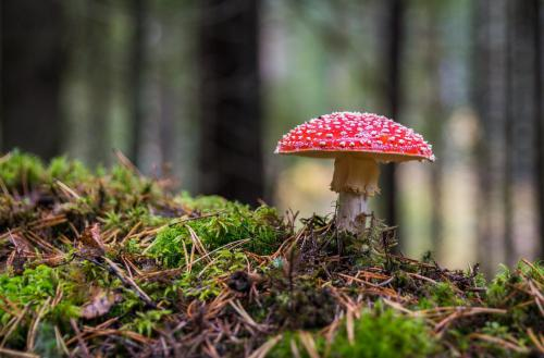 mushroom-3051519 1920