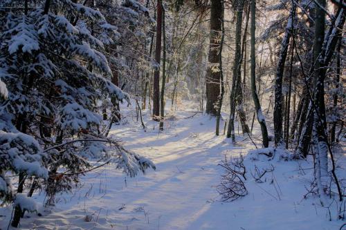 winter-2719663 1920